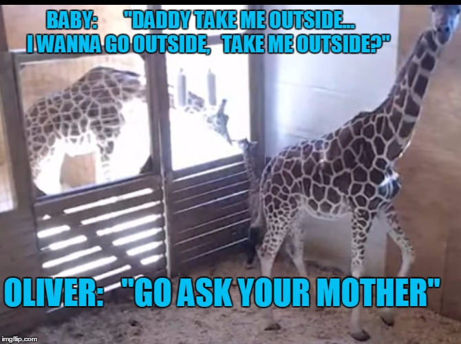 "The Happy Family |  BABY:       ""DADDY TAKE ME OUTSIDE...    I WANNA GO OUTSIDE,   TAKE ME OUTSIDE?""; OLIVER:   ""GO ASK YOUR MOTHER"" 