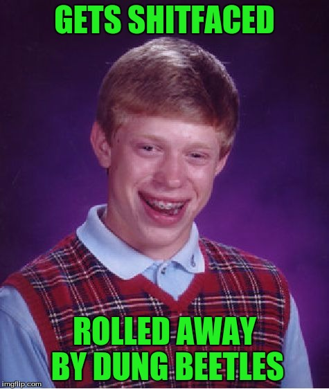 Bad Luck Brian Meme | GETS SHITFACED ROLLED AWAY BY DUNG BEETLES | image tagged in memes,bad luck brian | made w/ Imgflip meme maker