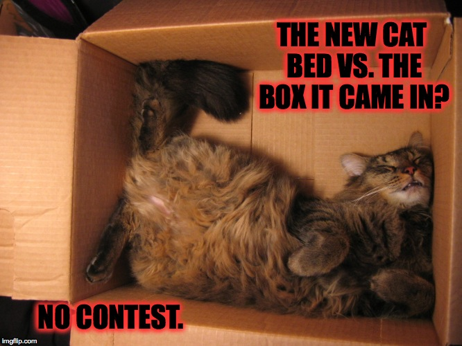 I'll Think Outside The Box Tomorrow | THE NEW CAT BED VS. THE BOX IT CAME IN? NO CONTEST. | image tagged in no contest | made w/ Imgflip meme maker
