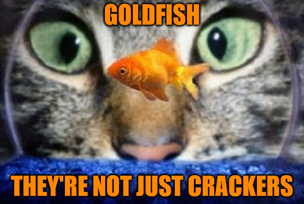 They're Not Just Crackers | GOLDFISH THEY'RE NOT JUST CRACKERS | image tagged in memes,cats,animals,fishbowl,crackers,goldfish crackers | made w/ Imgflip meme maker