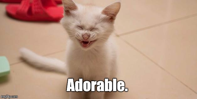 Cat Laughing | Adorable. | image tagged in cat laughing | made w/ Imgflip meme maker