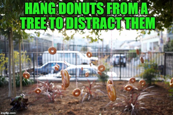 HANG DONUTS FROM A TREE TO DISTRACT THEM | made w/ Imgflip meme maker