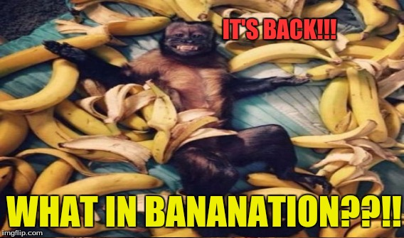 IT'S BACK!!! WHAT IN BANANATION??!! | made w/ Imgflip meme maker