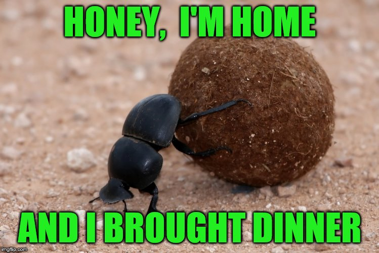 HONEY,  I'M HOME AND I BROUGHT DINNER | made w/ Imgflip meme maker