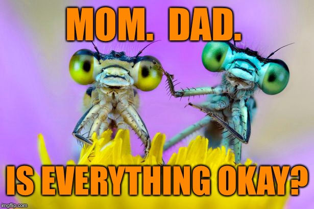 MOM.  DAD. IS EVERYTHING OKAY? | made w/ Imgflip meme maker