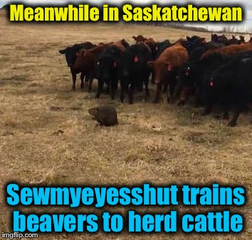 "I have officially changed ""Oh Canada"" to ""OMG Canada!""    That is all! 