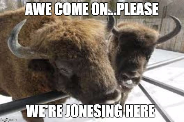 AWE COME ON...PLEASE WE'RE JONESING HERE | made w/ Imgflip meme maker