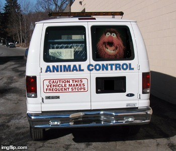 LOL | image tagged in animal control,animal,muppets,the muppets | made w/ Imgflip meme maker