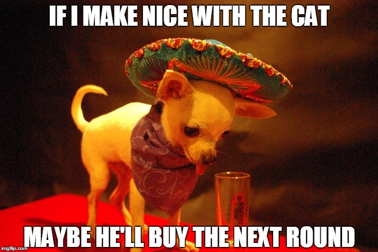 IF I MAKE NICE WITH THE CAT MAYBE HE'LL BUY THE NEXT ROUND | made w/ Imgflip meme maker