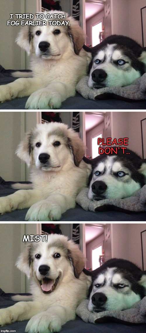 Bad pun dogs | I TRIED TO CATCH FOG EARLIER TODAY. MIST! PLEASE DON'T.. | image tagged in bad pun dogs | made w/ Imgflip meme maker
