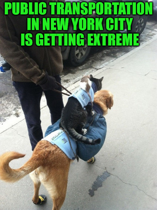A Rat On A Cat On A Dog On A Leash On A Sidewalk | PUBLIC TRANSPORTATION IN NEW YORK CITY IS GETTING EXTREME | image tagged in memes,cats,dogs,animals,new york city,public transportation | made w/ Imgflip meme maker