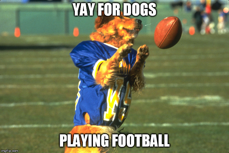 YAY FOR DOGS PLAYING FOOTBALL | made w/ Imgflip meme maker