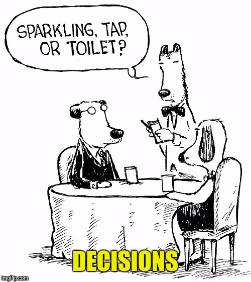 Decisions  | F | image tagged in dog week | made w/ Imgflip meme maker