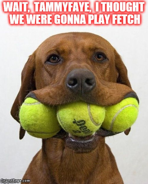 WAIT,  TAMMYFAYE,  I THOUGHT WE WERE GONNA PLAY FETCH | made w/ Imgflip meme maker