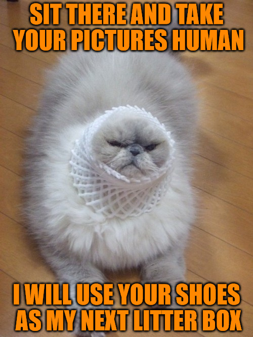 Mock me if you must, you will suffer my wrath | SIT THERE AND TAKE YOUR PICTURES HUMAN I WILL USE YOUR SHOES AS MY NEXT LITTER BOX | image tagged in memes,animals,cats,shame pictures,i am not happy,your shoes belong to me now | made w/ Imgflip meme maker