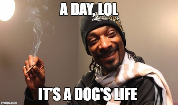 A DAY, LOL IT'S A DOG'S LIFE | made w/ Imgflip meme maker