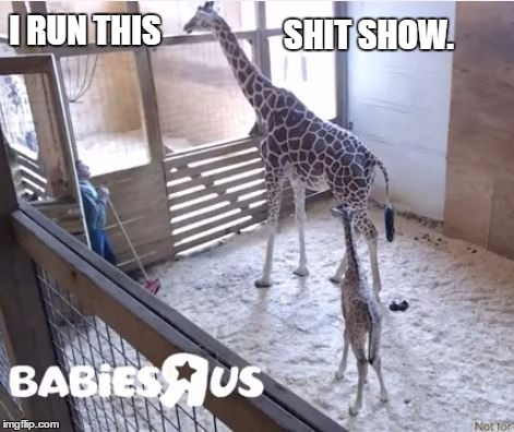 IRunThis2. |  SHIT SHOW. I RUN THIS | image tagged in april the giraffe | made w/ Imgflip meme maker