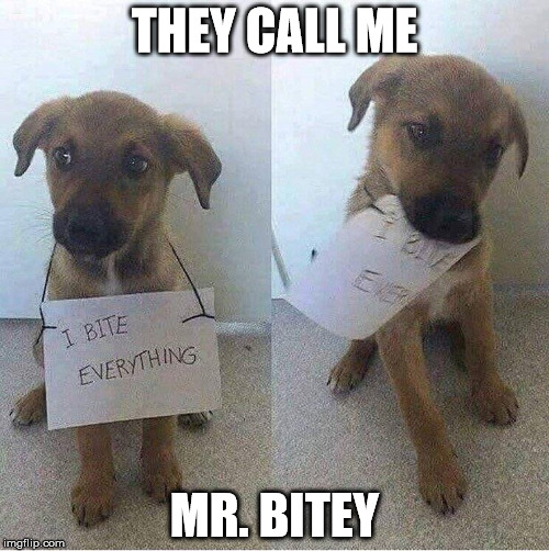 Mr. Bitey | THEY CALL ME MR. BITEY | image tagged in mr bitey,bite,loli bite of deadly cuteness,does your dog bite | made w/ Imgflip meme maker