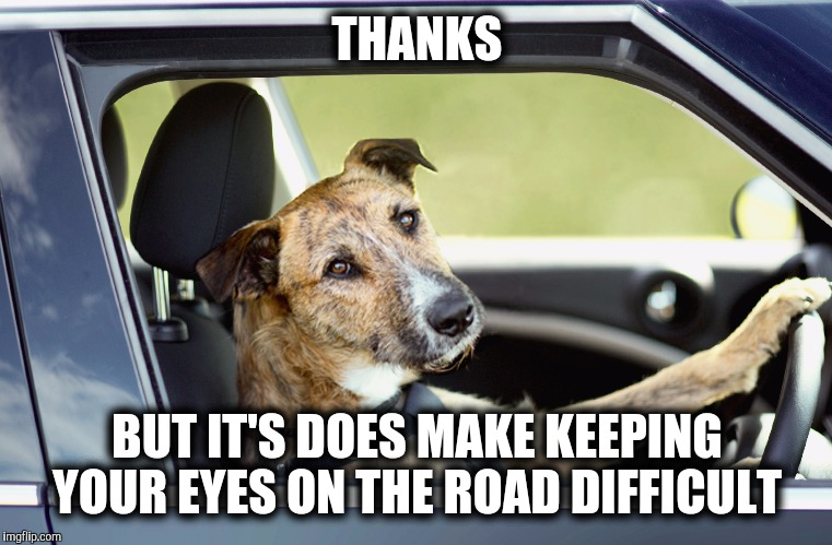 Dog Busted driving | THANKS BUT IT'S DOES MAKE KEEPING YOUR EYES ON THE ROAD DIFFICULT | image tagged in dog busted driving | made w/ Imgflip meme maker
