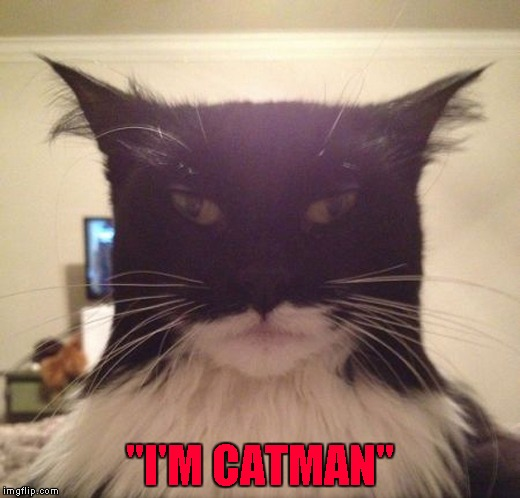 "The Dark Knight Rises Again!!! | ""I'M CATMAN"" 