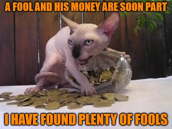 A Fool And His Money | A FOOL AND HIS MONEY ARE SOON PART I HAVE FOUND PLENTY OF FOOLS | image tagged in memes,animals,cats,i hope i got the saying right,if not i just made up a new one | made w/ Imgflip meme maker