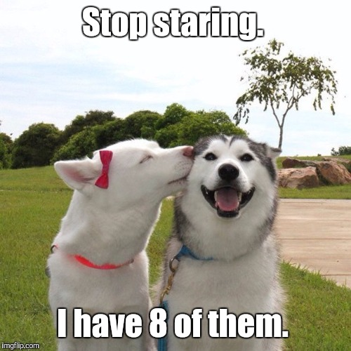 Dogs Kissing | Stop staring. I have 8 of them. | image tagged in dogs kissing | made w/ Imgflip meme maker