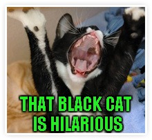 THAT BLACK CAT IS HILARIOUS | made w/ Imgflip meme maker