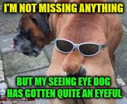 The blind leading he blind | I'M NOT MISSING ANYTHING BUT MY SEEING EYE DOG HAS GOTTEN QUITE AN EYEFUL | image tagged in memes,funny dogs | made w/ Imgflip meme maker