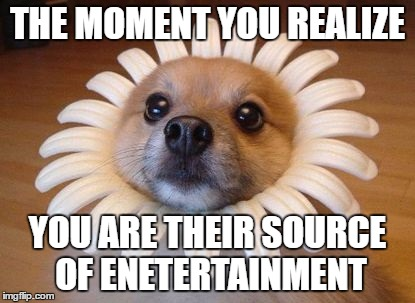 THE MOMENT YOU REALIZE YOU ARE THEIR SOURCE OF ENETERTAINMENT | made w/ Imgflip meme maker
