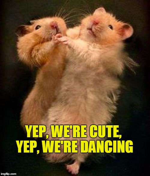 What More Do You Need in a Meme? | YEP, WE'RE CUTE, YEP, WE'RE DANCING | image tagged in meme,cute,dancing,hamsters | made w/ Imgflip meme maker