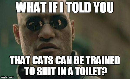 Matrix Morpheus Meme | WHAT IF I TOLD YOU THAT CATS CAN BE TRAINED TO SHIT IN A TOILET? | image tagged in memes,matrix morpheus | made w/ Imgflip meme maker
