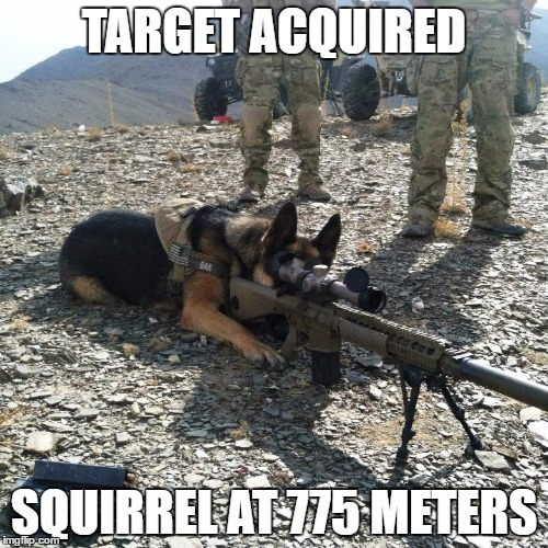Dog Sniper | TARGET ACQUIRED SQUIRREL AT 775 METERS | image tagged in us military | made w/ Imgflip meme maker