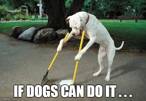 IF DOGS CAN DO IT . . . | made w/ Imgflip meme maker