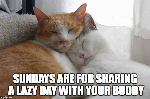 Another Sleepy Sunday | SUNDAYS ARE FOR SHARING A LAZY DAY WITH YOUR BUDDY | image tagged in best buddies | made w/ Imgflip meme maker