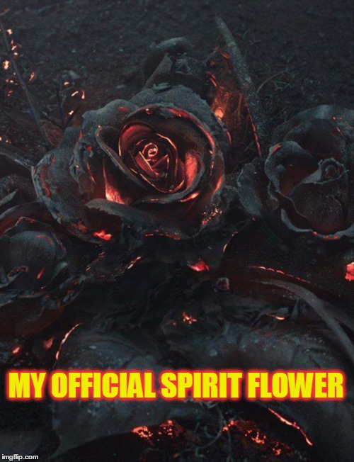 Why Aren't Spirit Flowers a Thing ~ Here's Mine | MY OFFICIAL SPIRIT FLOWER | image tagged in meme,funny,flowers,roses,shabbyroses,spirit flowers | made w/ Imgflip meme maker