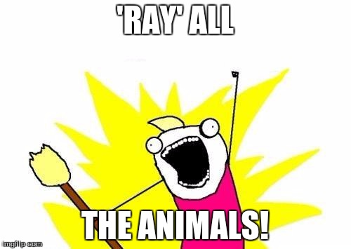 X All The Y Meme | 'RAY' ALL THE ANIMALS! | image tagged in memes,x all the y | made w/ Imgflip meme maker