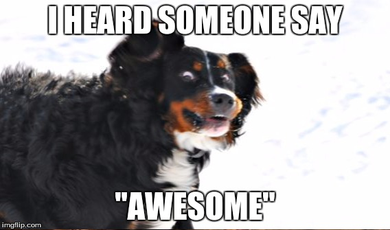 "I HEARD SOMEONE SAY ""AWESOME"" 