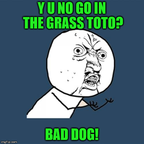 Y U No Meme | Y U NO GO IN THE GRASS TOTO? BAD DOG! | image tagged in memes,y u no | made w/ Imgflip meme maker