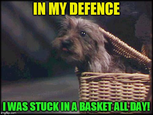 IN MY DEFENCE I WAS STUCK IN A BASKET ALL DAY! | made w/ Imgflip meme maker