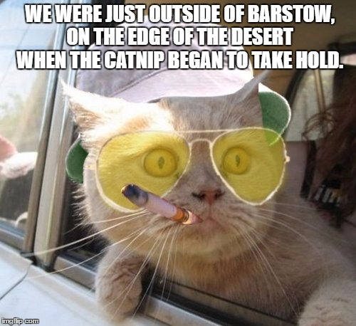 Fear And Loathing Cat | WE WERE JUST OUTSIDE OF BARSTOW, ON THE EDGE OF THE DESERT WHEN THE CATNIP BEGAN TO TAKE HOLD. | image tagged in memes,fear and loathing cat | made w/ Imgflip meme maker