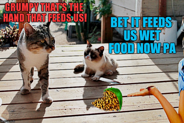 "Even as a kitten Grumpy made her own rules.. ""and yes that's her real father"" 