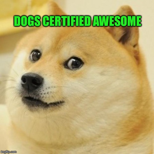Doge Meme | DOGS CERTIFIED AWESOME | image tagged in memes,doge | made w/ Imgflip meme maker