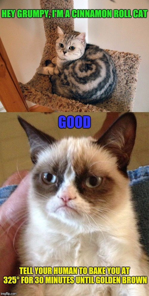 Ḡґυм℘¥ ℃@☂ | HEY GRUMPY, I'M A CINNAMON ROLL CAT TELL YOUR HUMAN TO BAKE YOU AT 325° FOR 30 MINUTES UNTIL GOLDEN BROWN GOOD | image tagged in grumpy cat,cats,memes,google images | made w/ Imgflip meme maker