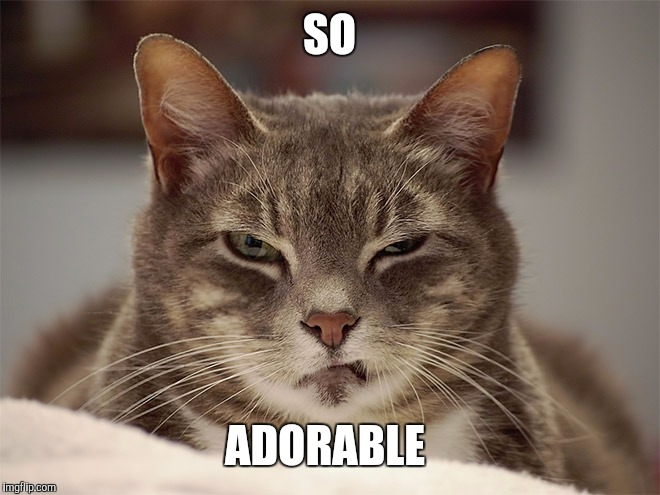 Sarcasm Cat | SO ADORABLE | image tagged in sarcasm cat | made w/ Imgflip meme maker