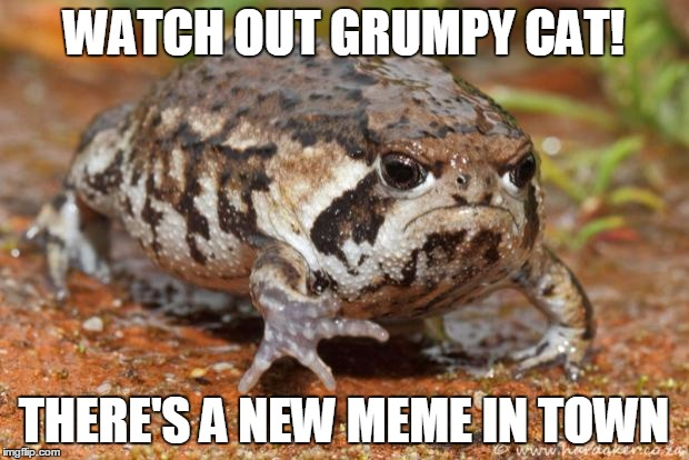 Grumpy Toad | WATCH OUT GRUMPY CAT! THERE'S A NEW MEME IN TOWN | image tagged in memes,grumpy toad | made w/ Imgflip meme maker