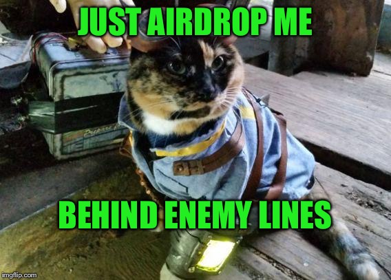 Fallout RayCat | JUST AIRDROP ME BEHIND ENEMY LINES | image tagged in fallout raycat | made w/ Imgflip meme maker