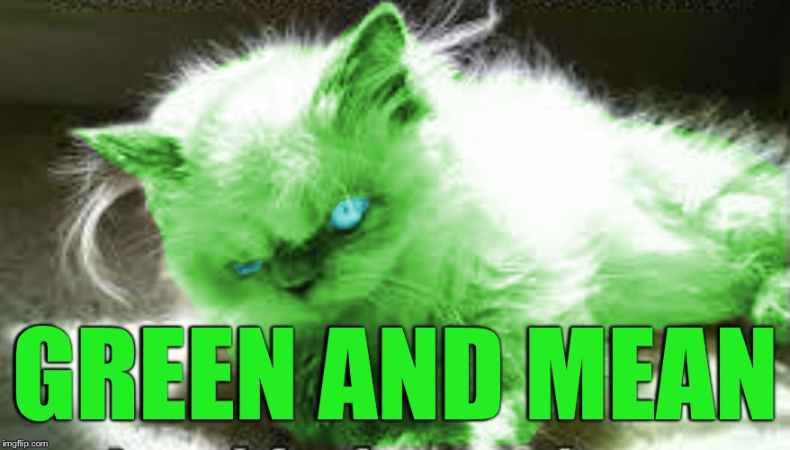 mad raycat | GREEN AND MEAN | image tagged in mad raycat | made w/ Imgflip meme maker