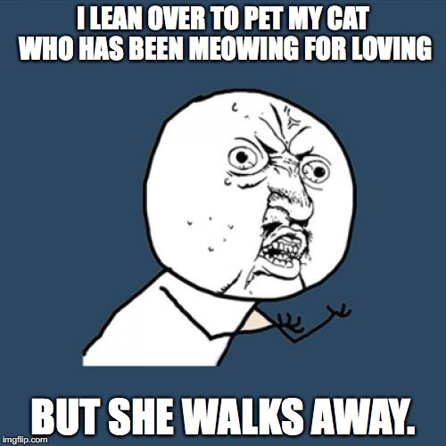 Y U No Meme | I LEAN OVER TO PET MY CAT WHO HAS BEEN MEOWING FOR LOVING BUT SHE WALKS AWAY. | image tagged in memes,y u no | made w/ Imgflip meme maker