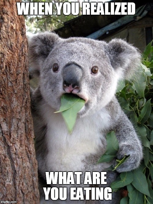 Surprised Coala | WHEN YOU REALIZED WHAT ARE YOU EATING | image tagged in memes,surprised coala | made w/ Imgflip meme maker