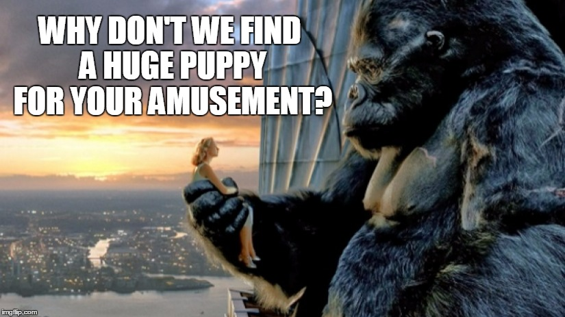 WHY DON'T WE FIND A HUGE PUPPY FOR YOUR AMUSEMENT? | made w/ Imgflip meme maker